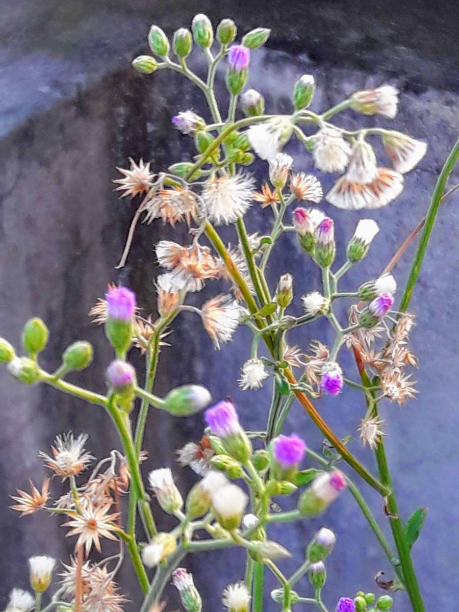 wild flowers (2)